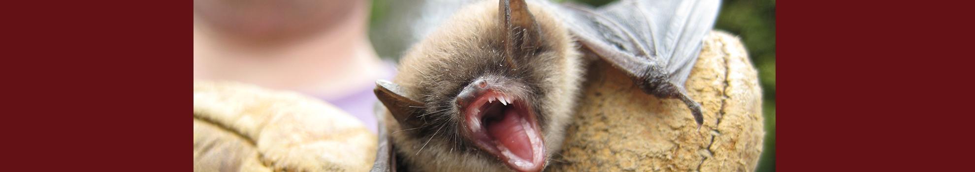 homepage-slider-bat