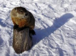groundhog01