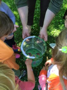 campers study butterflies