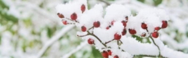 snowflake034