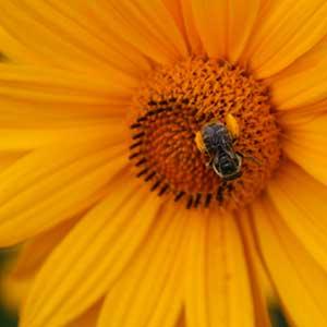 plant sale pollinator