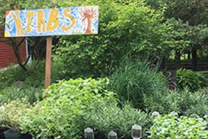 herbs plant sale