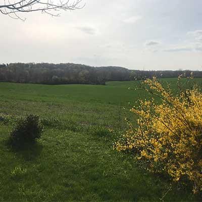 landscape shot of a field