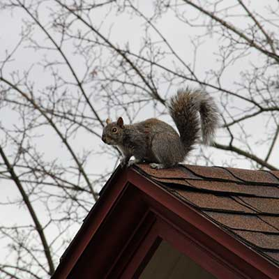 ssquirrel sitting on the roof