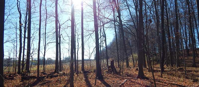 weak sunlight through bare trees