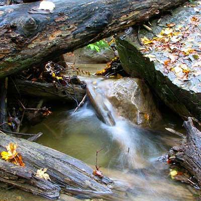 stream-in-fall-close-up-