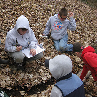 logging-nature-finds