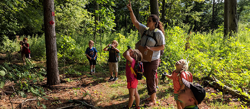 naturalist and kids look up through trees along the trail