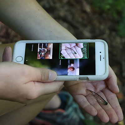 educator using a phone to show an insect wing to a group of students on Zoom