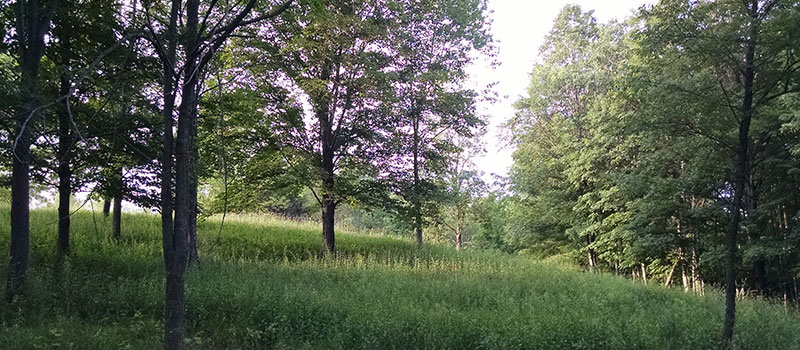 lanscape shot of back 40 field and trees at Baltimore Woods preserve