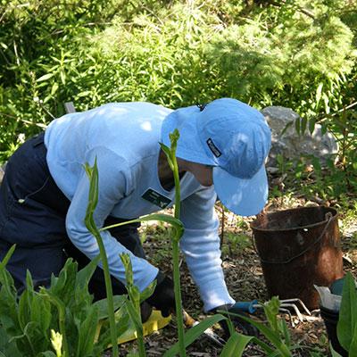 gardener kneeling and weeding