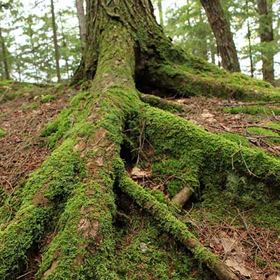 moss-on-tree-roots