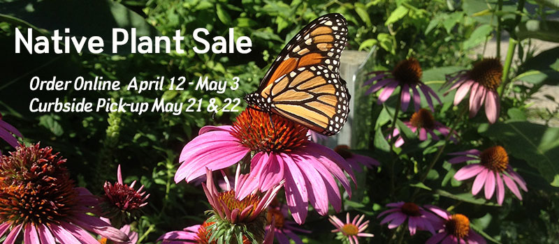 announcing public plant sale april 12 through May 3 with butterfly on cone flower photo