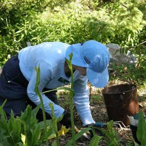 gardener on knees pulling weeds