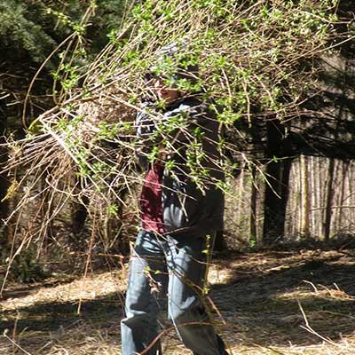 volunteer carrying huge handful of cuttings