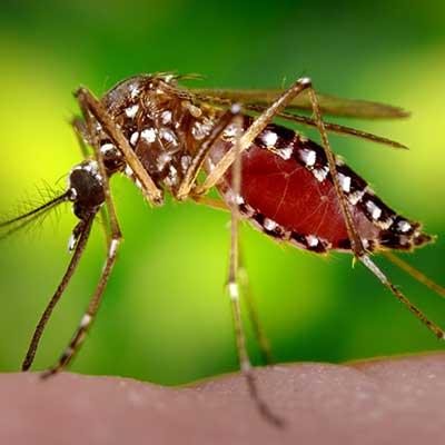 mosquito-biting human skin