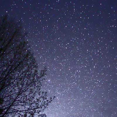 looking up at night sky stars and tree branches