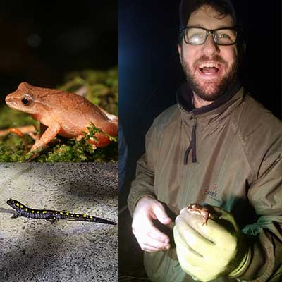 man holds spring peeper frog in gloved hand during the noght amphibina program; close up of wood frog and yellow-spotted salamander