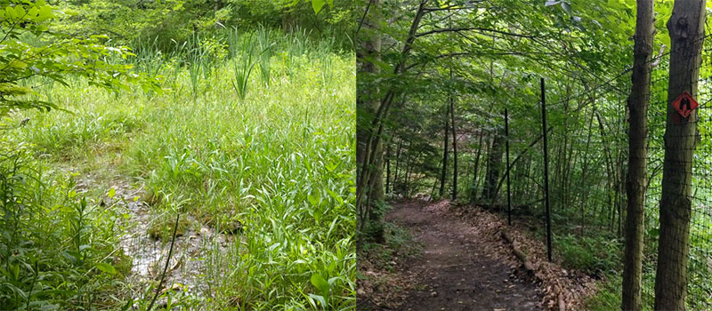 fen and fencing at Baltimore Woods preserve