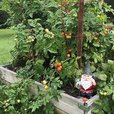 summer-garden-bed with garden gnome on corner