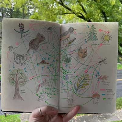 journal page showing ecosystem web of plants and animals hand drawn