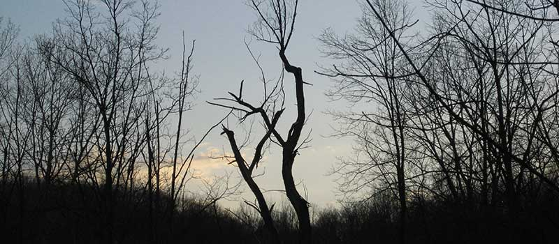silhouette of a bare tree